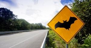 funny-signs-bat-18536715