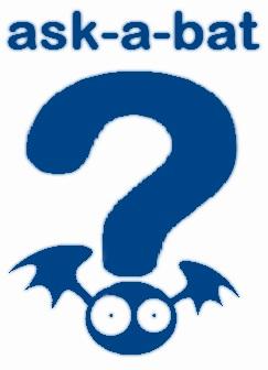 ask a bat